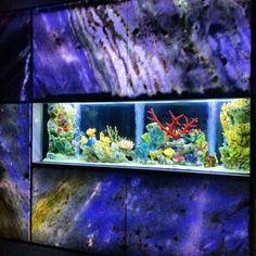 10 Living Color Aquariums Ideas Public Aquarium Aquarium Design Rainforest Cafe