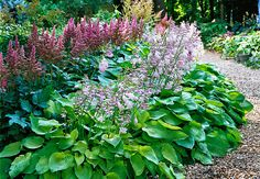 """Hostas in bloom with astilbe, via Lowe's Creative Ideas.  Now, I've had hostas before, and believe me, you CANNOT kill those things. I used to chop them in half every year to cull the growth. I'd take a big old shovel and just give a might """"whack"""" down the center of the plant with the edge of the shovel, pull out the """"extra,"""" and the original thrived as if I'd never touched it."""