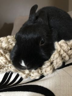 White tip on bunnies nose.