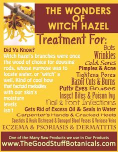 Psoriasis Diet - Wonderful uses for Witch Hazel! I already use witch hazel as a treatment for my pores.now I will add it to my list of natural beauty and health options! Check it out. Natural Health Remedies, Natural Cures, Natural Healing, Herbal Remedies, Natural Beauty, Healing Herbs, Medicinal Herbs, Organic Beauty, Natural Wonders