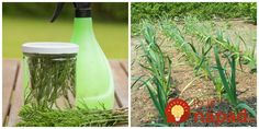 Praslička rolná nie je len obyčajnou burinou. V prírodnej medicíne ide o vysoko cenenú rastlinu, ktorá rastie doslova na každom rohu. Môže za to najmä jej schopnosť posilniť tkanivo. Málokto však vie, aká užitočná je praslička pre našu záhradu. Oxid kremičitý, ktorý obsahuje dokáže totiž posilniť rastové bunky a tým ochrániť rastlinku pred napadnutím škodcami... Bird Feeders, Gardening, Vegetables, Outdoor Decor, Flowers, Plants, Lawn And Garden, Vegetable Recipes, Plant