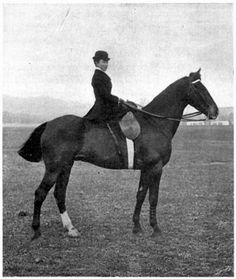 Woman seated side-saddle on a horse.