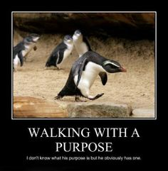 Funny Pictures - Walking with a purpose