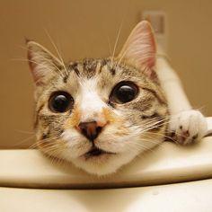 今日のカステラちゃん。Today's Castella-chan. #uchinonekora #ねこ部 #neko #cats #castella - @kachimo- #webstagram