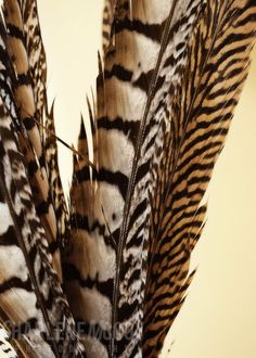 this is the kind of wall art I would have in my house! I have the feathers, just not the photo!