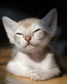 Zen Kitty