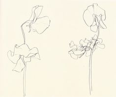 "Ellsworth Kelly, Plant Drawings From The Financial Times: ""Rendered primarily in pencil or ink, but occasionally awash in watercolour, the botanicals take drawing to its most simplified form while..."