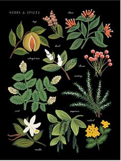 Rifle Paper Co. Herbs Print