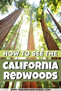 Check out this guide to the Redwoods of California. Find out where to stay near Redwoods National Park, how to get there, Redwoods hiking, and more. #california #redwoods | Redwoods National Park | Redwoods California | Redwoods photography | Redwoods road trip | California Travel | California Redwoods photography | Redwoods photos | Redwoods photography Northern California | Northern California road trip | Northern California hikes | things to do in Redwoods National Park | - Tourist Places  IMAGES, GIF, ANIMATED GIF, WALLPAPER, STICKER FOR WHATSAPP & FACEBOOK