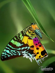 Beautiful Bugs, Beautiful Butterflies, Amazing Nature, Butterfly Painting, Butterfly Flowers, Butterfly Chrysalis, Butterflies In My Stomach, Dragonfly Insect, Flying Flowers
