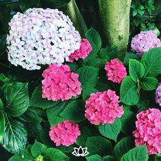 Permite que la naturaleza florezca.