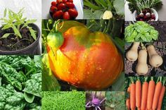Heirloom Vegetable Garden Kit 27 varieties by DigDirtCheap on Etsy, $22.50