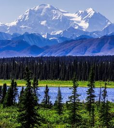 Denali, Alaska  #photography #landscape This is not our photo, but we did see the mountain with no clouds, plus caribou, grizzly, wolf, sheep, and more. Magical, wild place.
