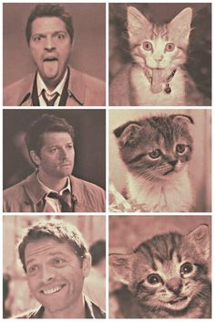 misha collins is my spirit animal part 2 ❤ (posted by cassandhisbees) -- LMABO! That middle pic: Priceless !! and like OMG! get some yourself some pawtastic adorable cat shirts, cat socks, and other cat apparel by tapping the pin!