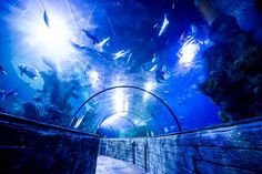 Book your tickets online for Malta National Aquarium, Qawra: See 2,298 reviews, articles, and 1,138 photos of Malta National Aquarium, ranked No.2 on TripAdvisor among 12 attractions in Qawra.