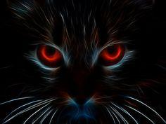 Fractal Black Cat.