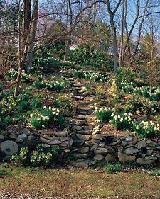 A Shade Garden: Season by Season - Martha Stewart Home & Garden