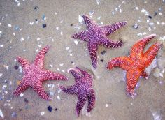 Dancing with the Starfish.   Flickr - Photo Sharing!