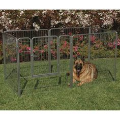 Precision Courtyard Dog Kennel - Here's the perfect solution for dog owners who…