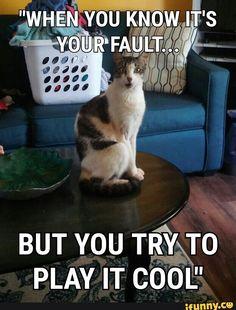 Hahah :) #cats #memes