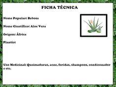 Plantas Medicinais - Os Incríveis: Babosa por Tiago Lins