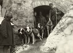 Italian World War I. Troops stand with their rescue dogs. The Alps, Italy.