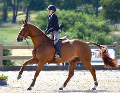 Wow, such a beautiful BEAUTIFUL horse :)
