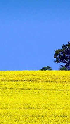 Pure Blossom Cole Flowers Field Landscape #iPhone #5s #wallpaper