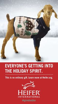 This christmas, honor your friends and family with the perfect present - a donation to Heifer International in their name! Choose a life-saving animal that will provide milk or eggs to a family struggling with dire poverty.