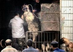 Animals electrocuted either anal or through the ear for fur products.... say NO to FuR!!!!