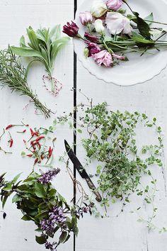 creating a bouquet My Flower, Fresh Flowers, Beautiful Flowers, Eatable Flowers, Belle Plante, Bouquet, Floral Photography, Garden Inspiration, House Plants