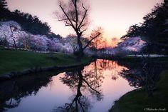 Sakura Blossoms  | World's Most Beautiful Places