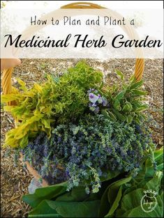 How to Plan and Plant a Medicinal Herb Garden l DIY Health #herbsgardening