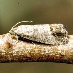 Codling Moth | Rodale's Organic Life