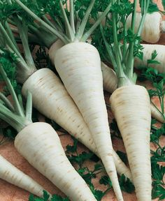 Herb Parsley root Sugar seeds organic from Ukraine for sale online Home Garden Plants, Home And Garden, Full Shade Plants, Dry Plants, Herb Seeds, Planting Seeds, Herbs, Organic, Vegetables