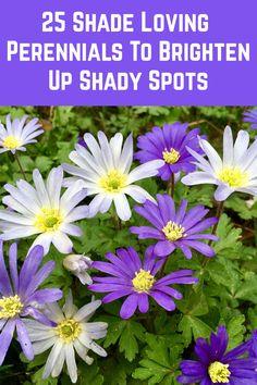 Shade Garden Plants, Summer Plants, Fall Plants, Best Shade Plants, Flowering Shade Plants, Shaded Garden, Cottage Garden Plants, Garden Shrubs, Potted Plants