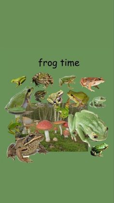 Picture Wall, Photo Wall, Frog Wallpaper, Pet Frogs, Frog Pictures, Frog Art, Frog And Toad, Room Posters, Indie Kids