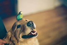 This looks like our old red dog Kelsey and my son's lovebird Chip.