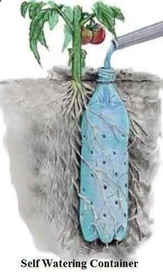 Bottle Drip Feeder for Plants - Water Plants with a Soda Bottle Underground Self Watering Recycled Bottle System - Potted Vegetable Garden Lif.Underground Self Watering Recycled Bottle System - Potted Vegetable Garden Lif. Diy Garden, Dream Garden, Lawn And Garden, Garden Projects, Garden Landscaping, Landscaping Ideas, Balcony Garden, Garden Kids, Tower Garden