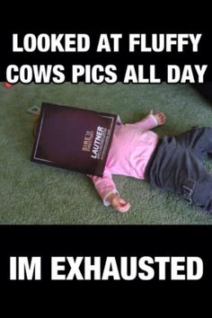 Fluffy Cow Overload! (This is going to be you soon after you search fluffy cows.)