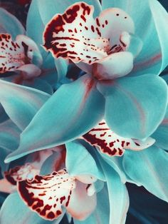 ✯ Orchids - There aren't too many turquoise blue flowers, especially nature art work with rust brown painted dot and splotch details! - DdO:) - FLOWERS BEYOND EXPECTED. Pinned via eclecticdeva's ORCHIDS board. Tropical Flowers, Exotic Flowers, Amazing Flowers, My Flower, Beautiful Flowers, Fresh Flowers, Tropical Colors, Colorful Roses, Orchid Flowers