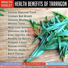 Health Benefits of Tarragon