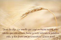 La Biblia dice que somos salvos sólo por la fe, pero no debemos olvidar que la verdadera fe retiene la Palabra, persevera en el tiempo y da fruto.