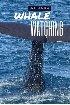 Whale Watching in Mi