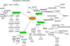 Biochemistry- Carbohydrates