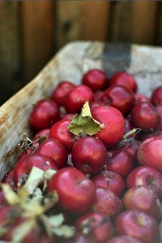 Apple Farm Bounty ❤❦♪♫