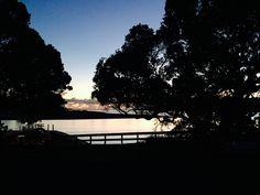 Pohutukawa trees on Raglan Harbour, NZ