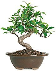 Grow your first bonsai from seed – Gardening Site