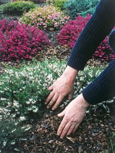 How to winterize your garden