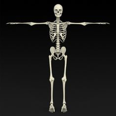 Realistic Human Skeleton by Gamingarts Here is the Realistic Model of Human Skeleton. Model has perfect edge loop based topology. All Materials and Textures are incl 3d Anatomy, Human Anatomy, Human Skeleton 3d, Skeleton Model, Thank You Wallpaper, Wallpaper Powerpoint, Normal Map, Model Gallery, Drawing Lessons